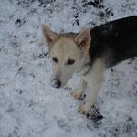 Schnee, da gibt's ne kalte Nase!