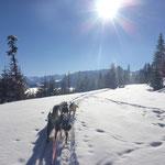 Winter, Schnee, Sonnenschein - was will man mehr?!