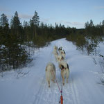Die Hunde waren top fit und wir fuhren Tagesetappen von 40km, 60km und einmal sogar 80km!