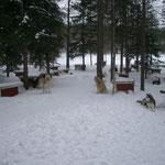 Auf einer zwei Tagestour, bei jeder Cabin stehen Hundehütten mit Stroh bereit!