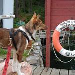 Troll auf Erkundungstour, wir besuchten eine Art Ballenberg auf norwegisch ;-)