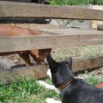 Finn flirtet mit dem Schweinchen....
