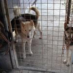 Alaskan Huskies von Ralf.