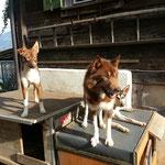 Unsere zwei Braunen! ;-))