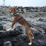 Troll an der Küste Norwegens - bäääh Salzwasser ;-)