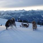 Uma, Ajka und Alessia ziehen die ersten Spuren im Schnee.