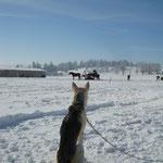 Taiga beobachtet gebannt die Pferde...