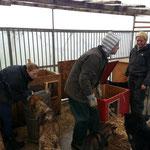 Alle halfen mit - mehr Menschen im Zwinger als Hunde!