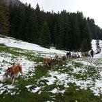Schnee im Mai, die Hunde haben nicht's dagegen!