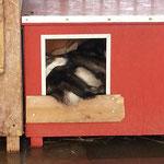 In der Kleinsten Hütte ist Platz!;-)