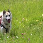 Attun und die Alpwiese