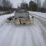 Mit 10 Hunden auf der Fahrt nach Finnland. Freitag Abend um 22.00 Uhr war Abfahrt.