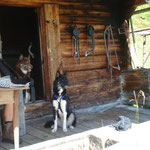 Tagesausflug mit Willow und Chumana zur Hütte.