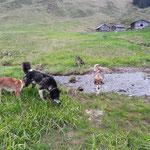 Auch Nome und Crossby gefällt es auf der Alp.
