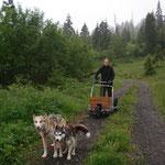 Barbara kam mit ihren beiden Sibiriermädels auch mit.