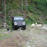 Bei Thömi und Süsi hat es viel Platz, so konnten wir unsere Hunde mitnehmen.