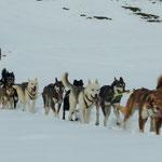 11 Hunde, der Chef und ein Passagier.