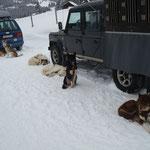 Nach 11km und 146 Höhenmeter, einen Trainigswagen + Person durch 10 -15cm Schnee ziehen,