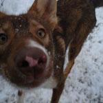 Troll tollt im Schnee trum ;-)