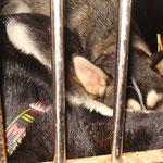 Sind halt doch noch Babies, kaum in der Box schon schliefen sie tief und fest!