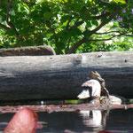 Schnappschuss des Tages: Frosch reitet auf Ende ;-)