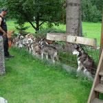 Die Jenni-Hunde durften in den Auslauf von Thömi.