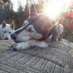 Unsere Sky, toller Hund mit Modelqualitäten