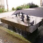 Taubenbrunnen am Marktplatz Taufkirchen