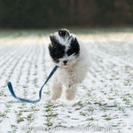 ich liebe den Schnee!
