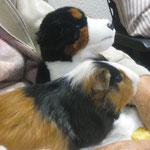 Marcia verstarb leider an Milben, wir konnten sie nicht mehr retten! :-( (+ Dezember 2011)