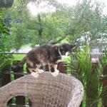Kalina, wunderschöne Maus, die Zeit war viel zu kurz mit dir!!! (+ 2009)