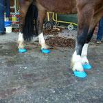Pony von Welt trägt türkis