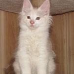 Avtograf Karmino Cat