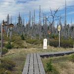 Nationalpark Bayerischer Wald (Foto Baums): Grenze Marktfleckl