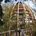 Nationalpark Bayerischer Wald (Foto Alice Alteneder): Baumwipfelpfad