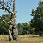 Nationalpark Bayerischer Wald (Foto Alice Alteneder): Kohlschachten