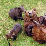 Nationalpark Bayerischer Wald: Bärin mit Jungen