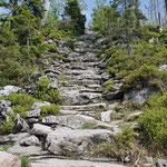 Nationalpark Bayerischer Wald (Foto Alice Alteneder): Himmelsleiter Lusen