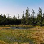 Nationalpark Bayerischer Wald: Hintere Sulz