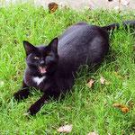 Haus Hildegard Katze