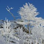 Nationalpark Bayerischer Wald (Foto Simonis): Winterlandschaft