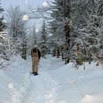 Nationalpark Bayerischer Wald: Winterwanderung