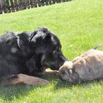 Basco mit Kaninchenfreundin Eva