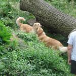 """Flocki und Alma im """"Dschungelparadies"""""""