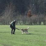 ZTP, Spiel mit Hundeführer