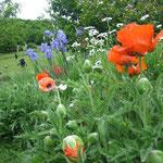 Espaces fleuris autour de la maison