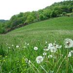 La nature préservée pour des vacances au vert