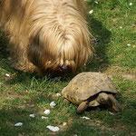 Bya-ras Job: Schildkröte hüten