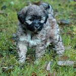 Hübsche Fiona - 7 Wochen alt - im Garten