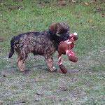 F-Wurf - Femi mit Beute - 8 Wochen alt